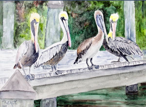 Pelicans: The Privilege Of Youth Art | David Beale
