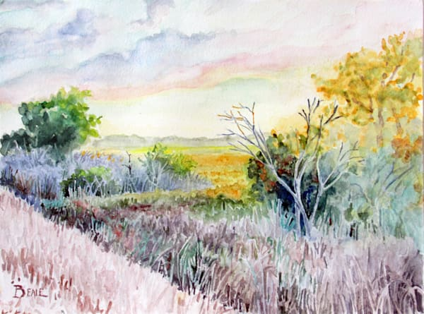 Early Morn In The Sawgrass Art | David Beale