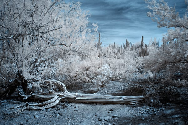 Mg 1532 Edit Edit Photography Art | frednewmanphotography