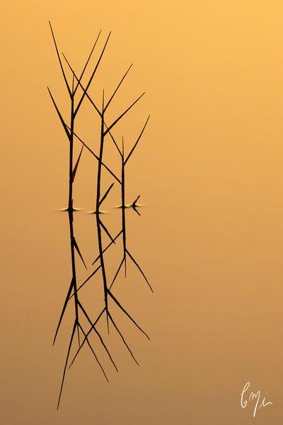 Constance Mier Photography - fine art nature
