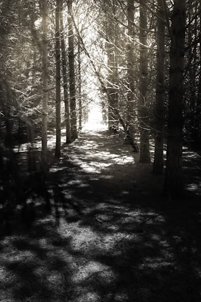 Black & white photograph of light rays into a cedar forest for sale as fine art by Sage & Balm