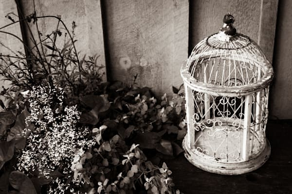 Rustic black & white photograph of an antique birdcage for sale as fine art by Sage & Balm