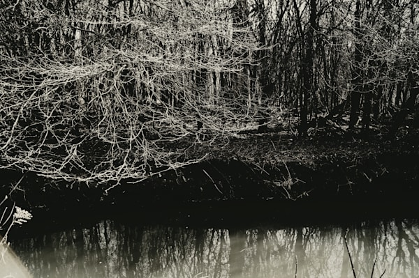 Black & white abstract photograph of a forest and tree reflections in a river, for sale as fine art by Sage & Balm