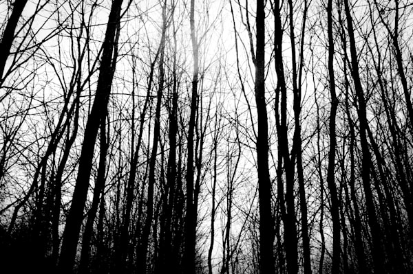 Conceptual & abstract black and white minimalist photograph of graphic trees in a forest, for sale as fine art by Sage & Balm