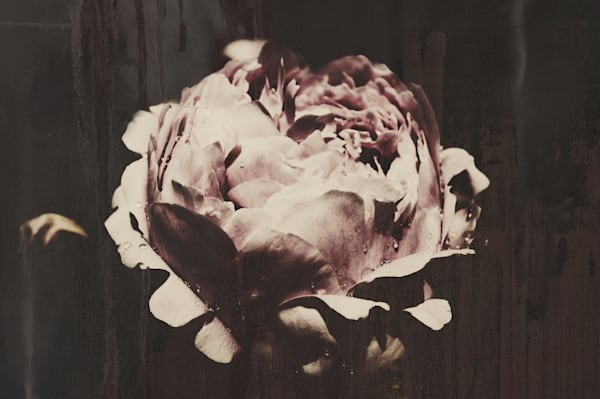 Conceptual & abstract moody floral art photograph of a muted pink peony made to look like a painting, for sale as fine art by Sage & Balm