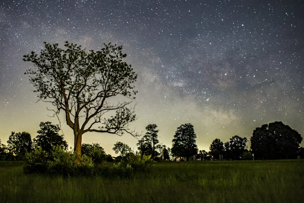 Crandell Tree & Milky Way Rising
