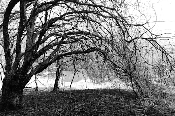 Black & white photograph of trees forming an archway in an abandoned forest, for sale as fine art by Sage & Balm