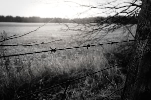 Black & white photograph of barbed wire on an abandoned  farmer's fence in rural Ontario, for sale as fine art by Sage & Balm