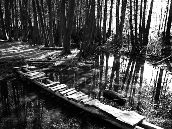 Black & white woodland photograph of a footbridge over water in an Ontario forest, for sale as fine art by Sage & Balm