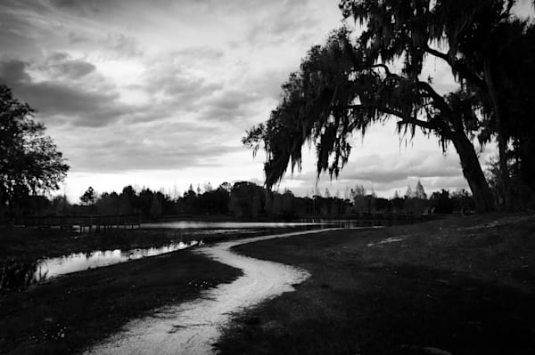 Dark black & white photograph of a Florida oak tree over a path by a lake, for sale as fine art by Sage & Balm