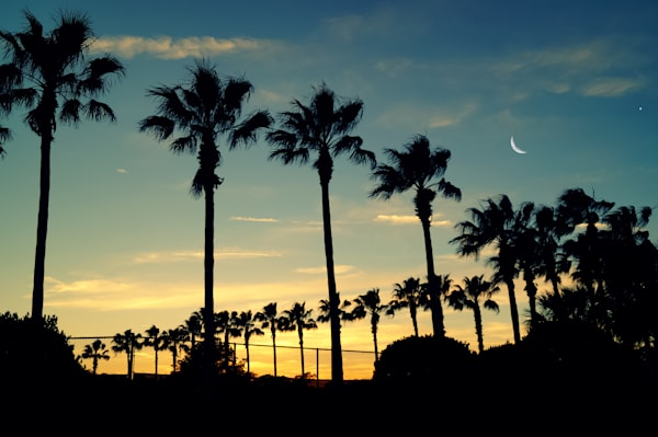 Moon And Palms Photography Art | Sage & Balm Photography