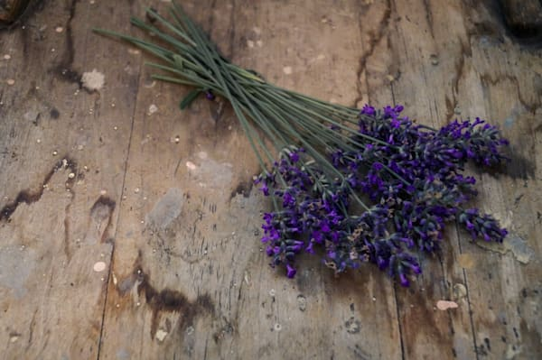 Color floral photograph of dried purple lavender, resting on rustic, weathered wood, for sale as fine art by Sage & Balm