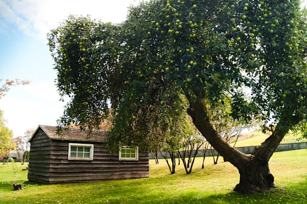 Color photograph of a historic war of 1812 outpost building and apple tree in Fort George, NOTL, for sale as fine art by Sage & Balm