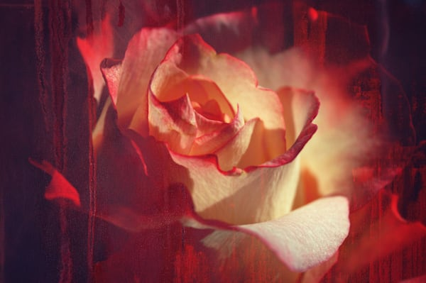 Floral fine art Photographs in color for sale | Sage & Balm Photography