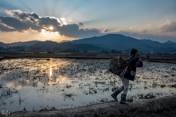 Apatani girl with basket on back walking at sunset in the field, in fine art photograph