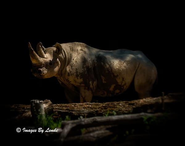 Rhino in the Shadows