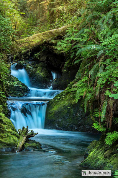 The essence of the Quinault rainforest of Washington state/Enjoy Willaby Creek Falls for an eternity as a fine art landscape print by Tom Schoeller