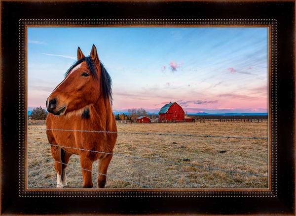 Horse w-Red Barn 2 (161366ANND8) Farm Horse Photograph for Sale as Framed Fine Art Paper Print