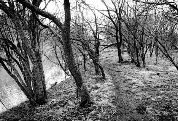 Windswept Trees Photography Art | Sage & Balm Photography