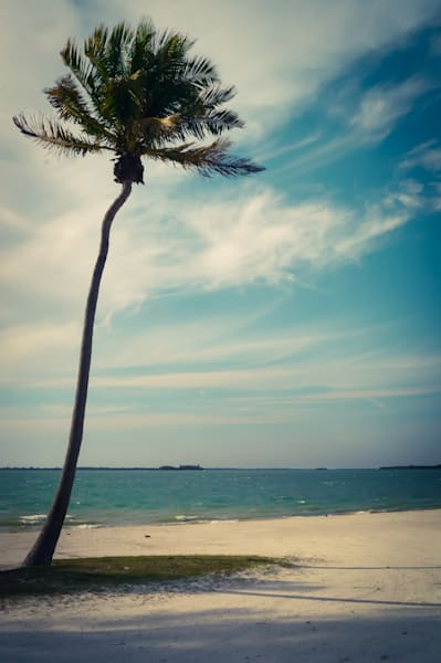Lonely Palm Photography Art | Sage & Balm Photography