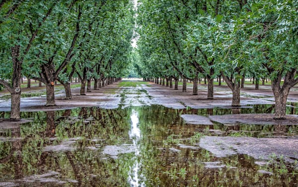 Fine Art Photographs, Orchard Reflections | d'Ellis PhotographicArt by Bill