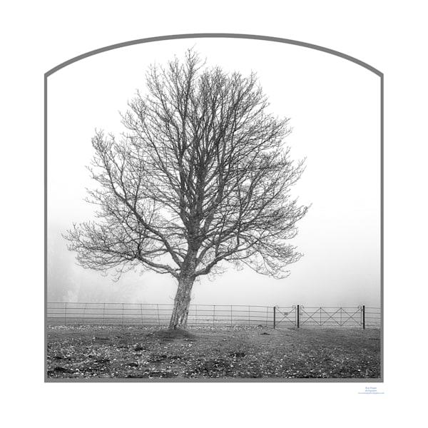 roy fraser mottisfont tree in mist