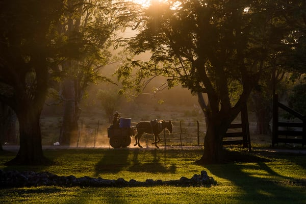 Horse drawn cart silhouetted at sunset between trees. in fine art photograph