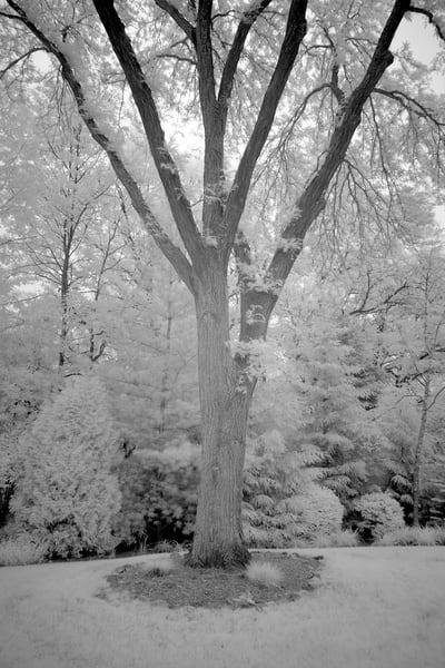 Dsf1413 Edit Photography Art | frednewmanphotography