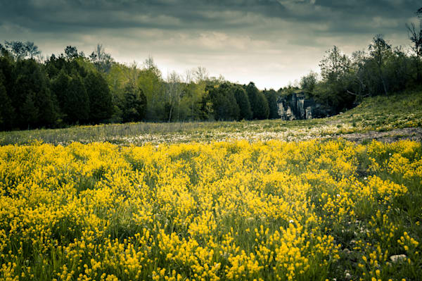Cliffs And Yellow Wildflowers Photography Art | Sage & Balm Photography