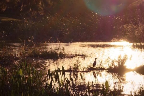 Florida Sunset Photography Art | Sage & Balm Photography