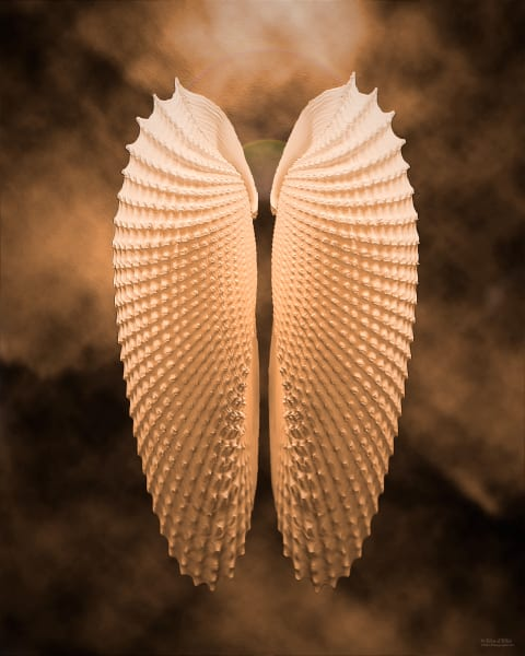 Angel Wings, d'Ellis Photographic Art photographs, Elsa