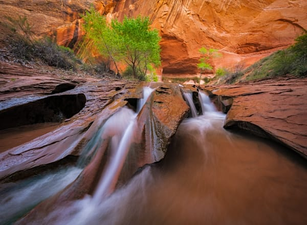 Lush Canyon Photograph for Sale as Fine Art