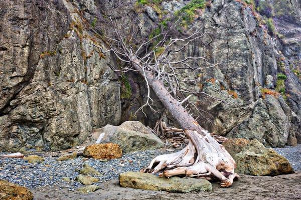 Fallen Tree One