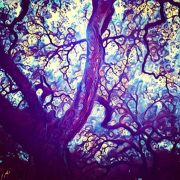 Live Oaks at Sacred Heart by Erin McNutt