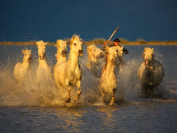 The Camargue Horses