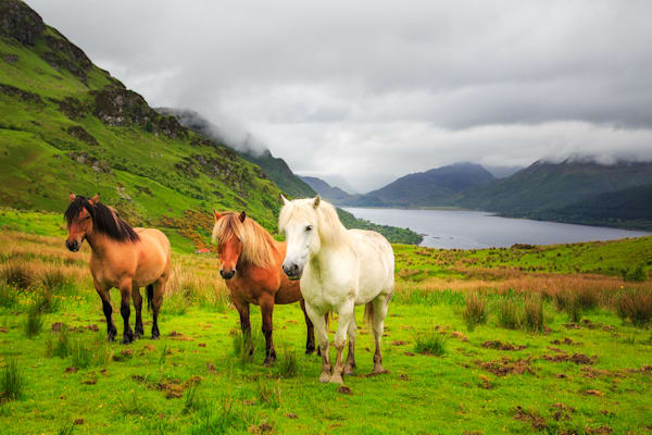 Scottish Horses