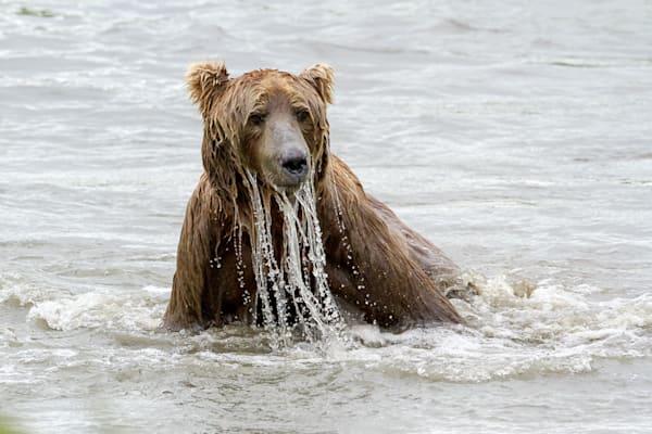 Water Beard