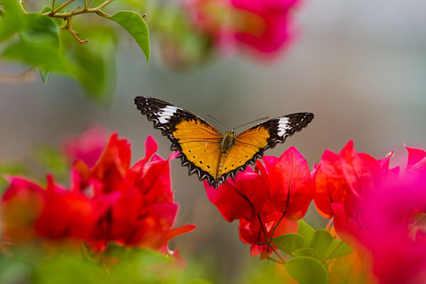 Butterfly Photography Art | Light and Impressions LLC