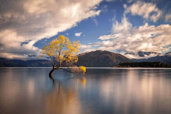 Wanaka Tree Photography Art | Light and Impressions LLC