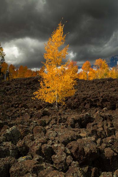 Volcanic Aspen