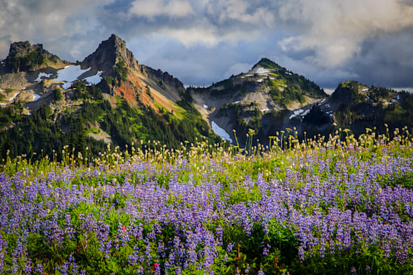 Tatoosh Wildflowers Photograph for Sale as Fine Art