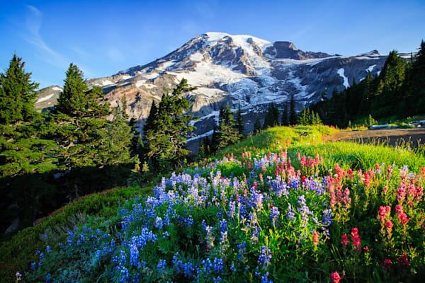Rainier Wildflowers Photograph for Sale as Fine Art