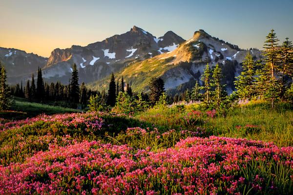 High Mountain Heather Photograph for Sale as Fine Art