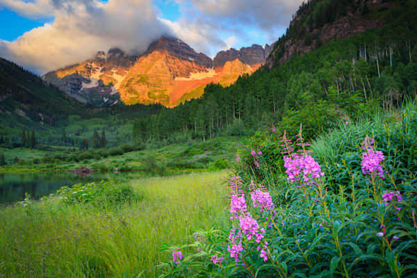Fireweed at the Bells