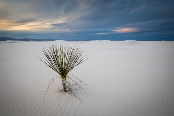 Lonely White Sands Photograph for Sale as Fine Art