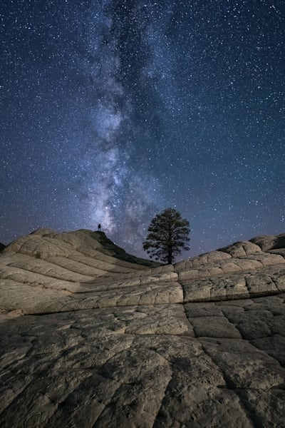 Milky Way at the Lone Tree Photograph for Sale as Fine Art
