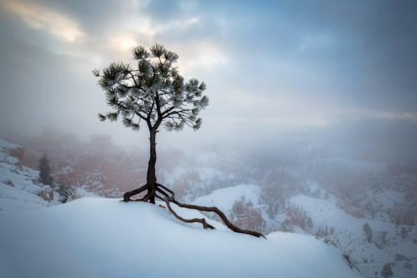 Snowy Tree at Bryce