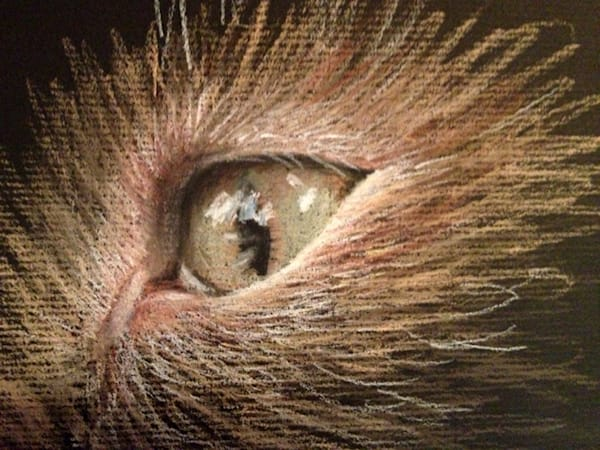 Cat's Eye, pastel drawing by Holly Whiting