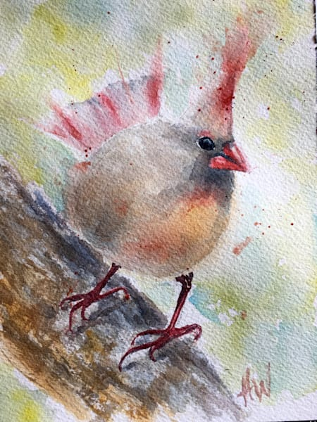 Fat Female Cardinal