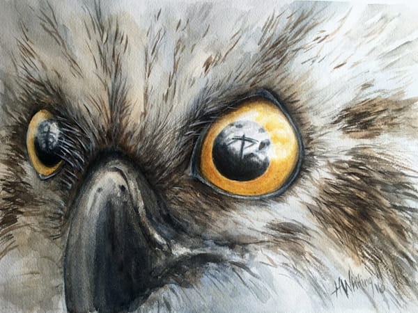Painting of osprey eyes, face, eye reflection